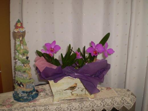 主日礼拝メッセージ要約『まことのぶどうの木』(2011.10.16)